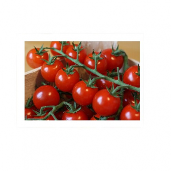 Rajčátka cherry keřík